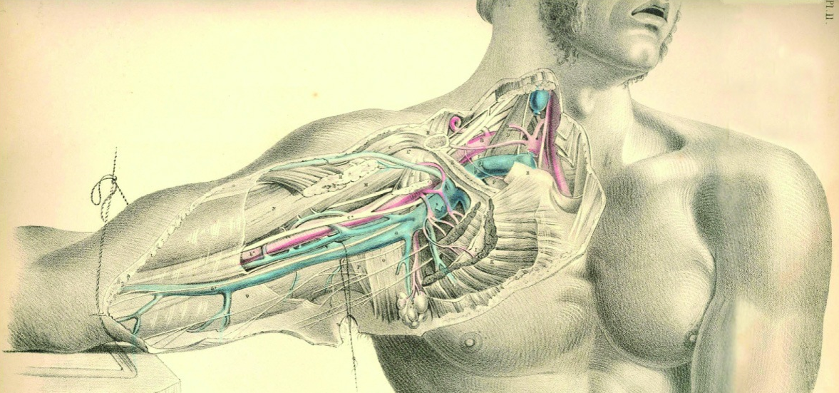 Unlocking the Front Body via the Coracoid Process – Mindful MVMNT