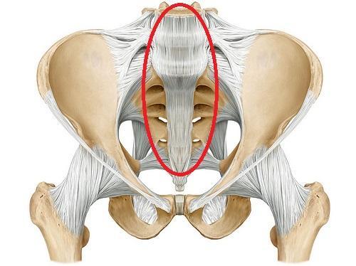 anterior_longitudinal_ligament-14630945355223D10B8.jpg