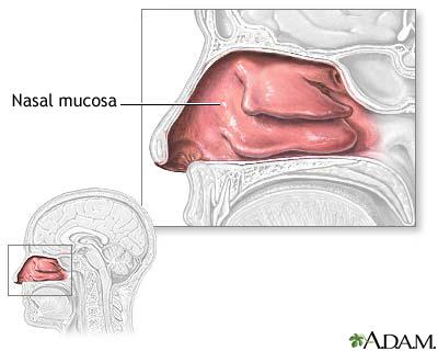 nasalmucosa.jpg