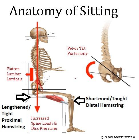 sittinganatomy.jpg