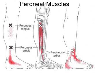 peroneal-text.jpg