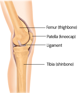 smith-nephew-kneeanatomy.jpg
